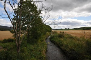 Image showing a drainage feature and buffer strip